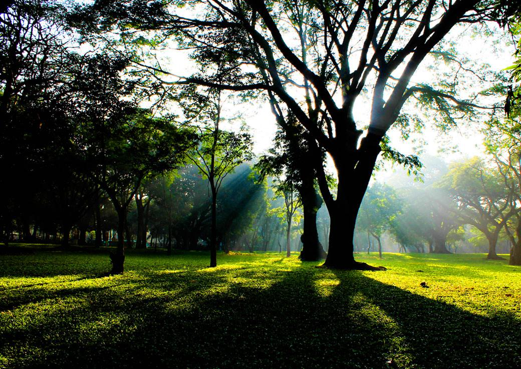 The Cubbon Park at Bangalore